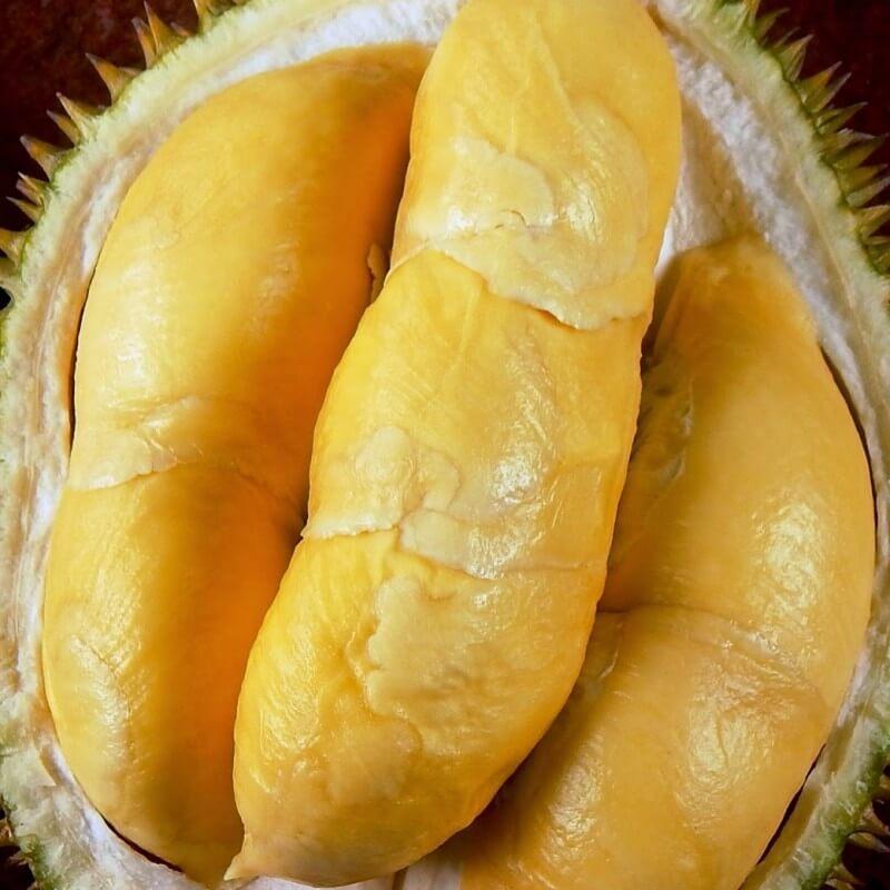 jual-bibit-durian-bawor.jpg