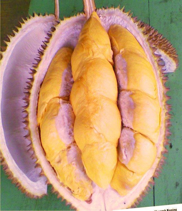 jual-bibit-durian-menoreh.jpg