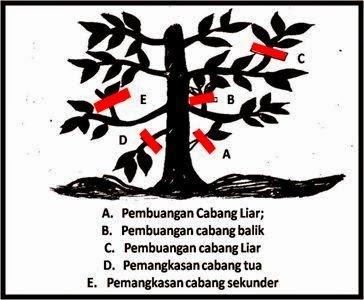 pemangkasan-pohon-durian