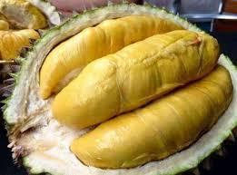 durian-montong.a.1.jpg
